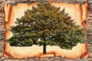 Family-tree-300x200
