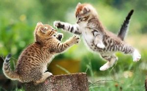 Flying-cat-fight